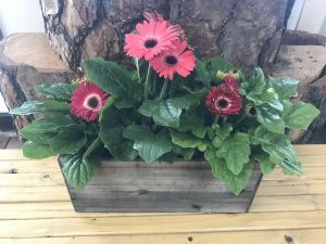 Gorgeous Gerbera Box